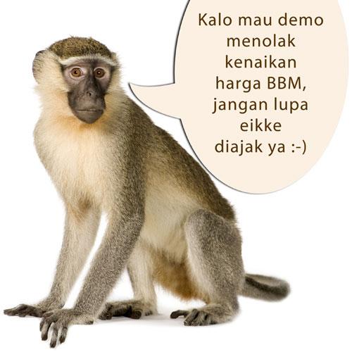 monyet_demo